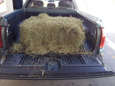Hay Bale In Back Of Ute